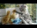«кошка снайпер» под музыку Нагора - чечня-снайпер. Picrolla