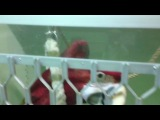 попугаи Цирка на Цветном
